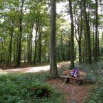 Pilgerweg Loccum-Volkenroda