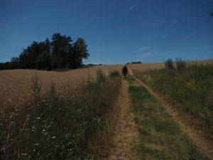 Kornfelder überall